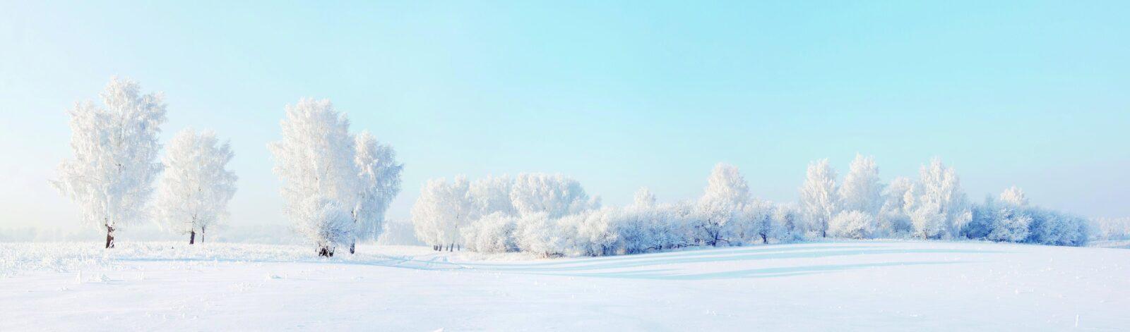 les-zima-sneg